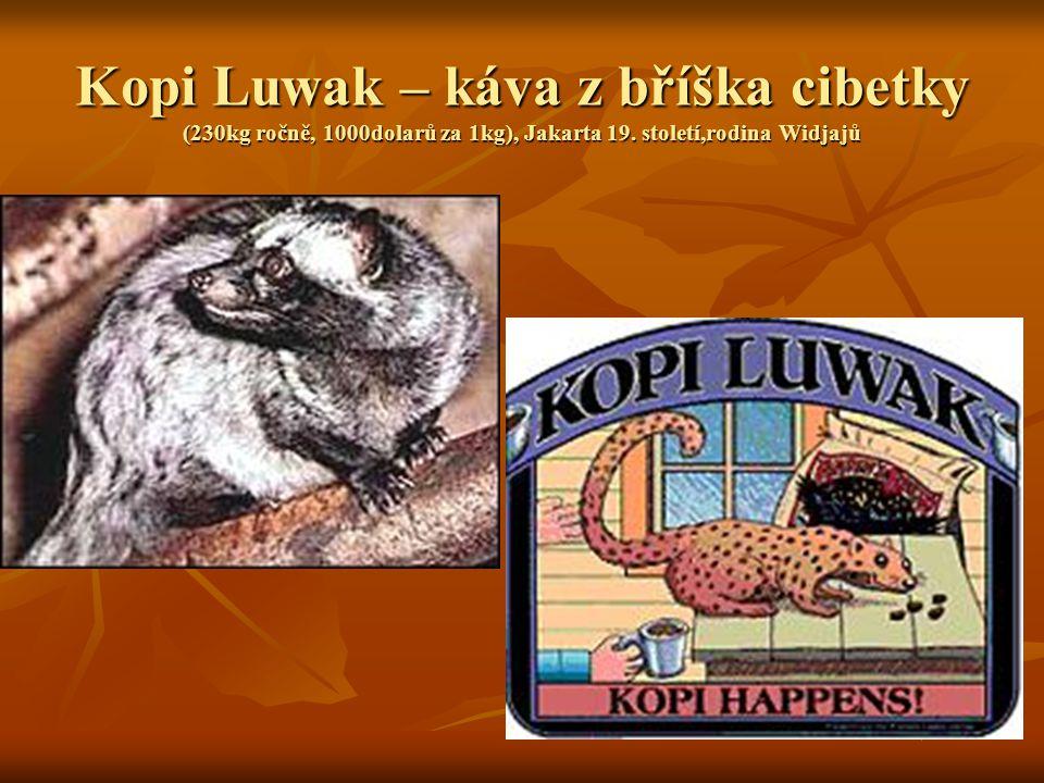 Kopi Luwak – káva z bříška cibetky (230kg ročně, 1000dolarů za 1kg), Jakarta 19.