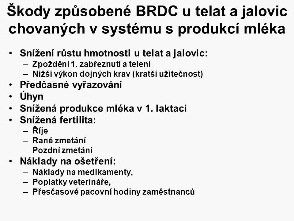 Škody způsobené BRDC u telat a jalovic chovaných v systému s produkcí mléka