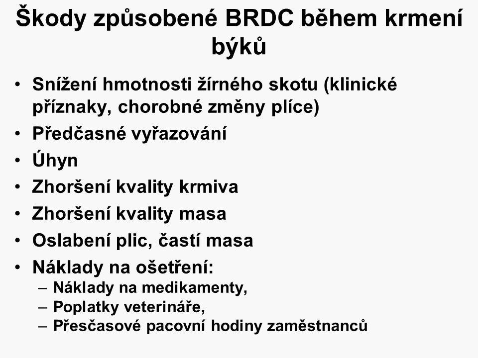 Škody způsobené BRDC během krmení býků