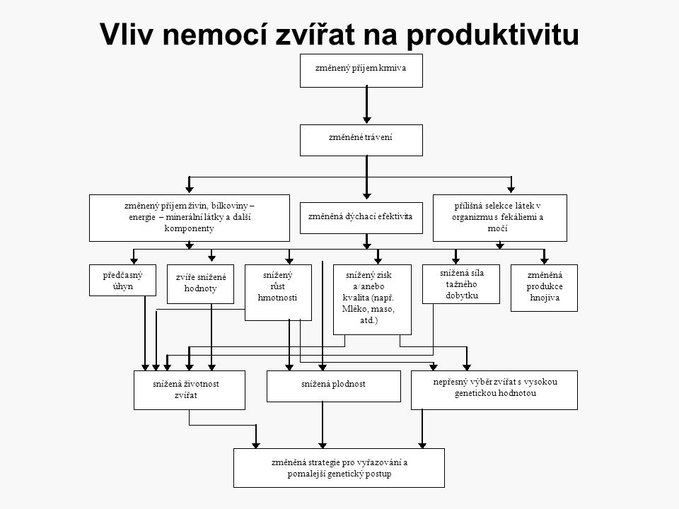 Vliv nemocí zvířat na produktivitu