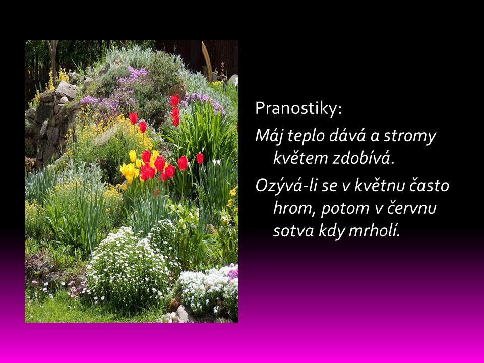 Pranostiky: Máj teplo dává a stromy květem zdobívá.