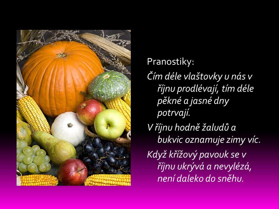 Pranostiky: Čím déle vlaštovky u nás v říjnu prodlévají, tím déle pěkné a jasné dny potrvají.
