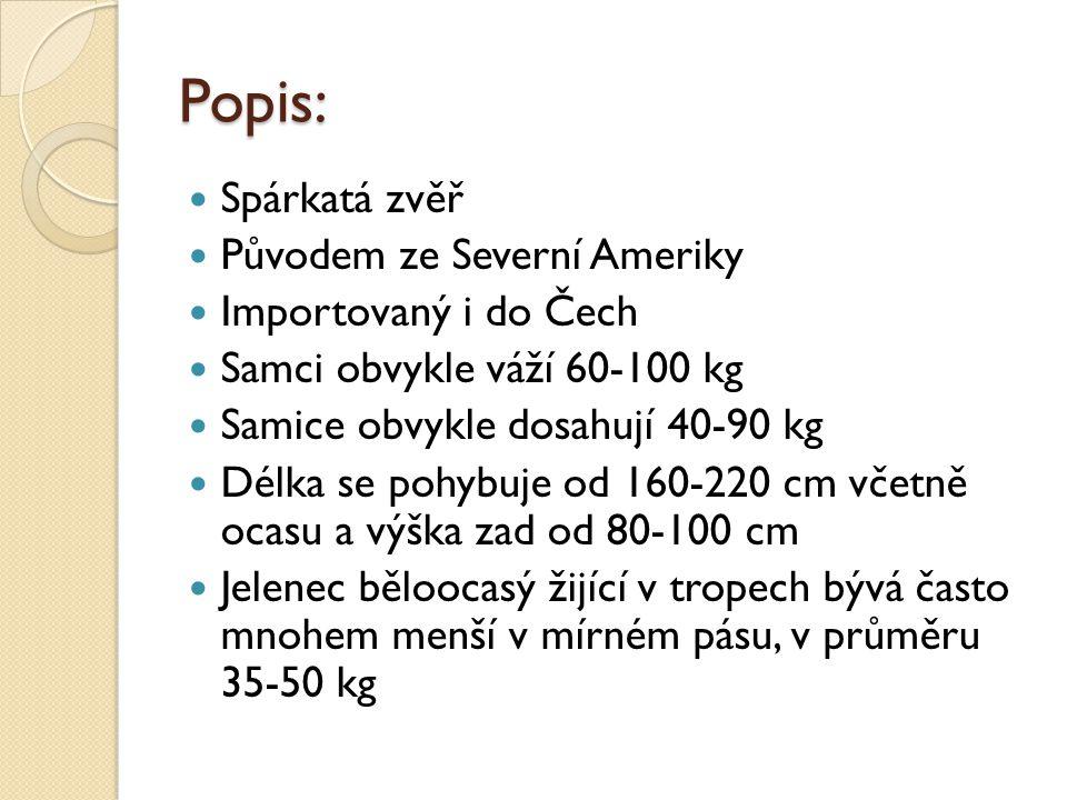 Popis: Spárkatá zvěř Původem ze Severní Ameriky Importovaný i do Čech