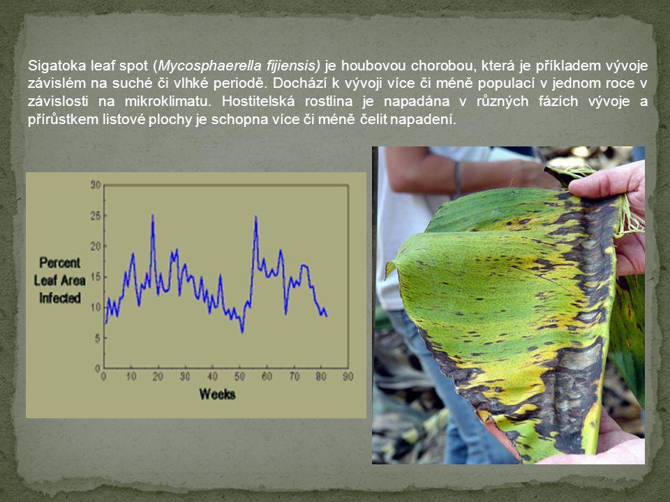 Sigatoka leaf spot (Mycosphaerella fijiensis) je houbovou chorobou, která je příkladem vývoje závislém na suché či vlhké periodě.