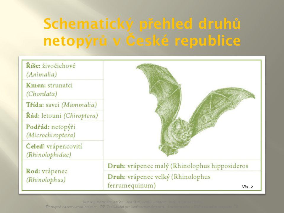 Schematický přehled druhů netopýrů v České republice