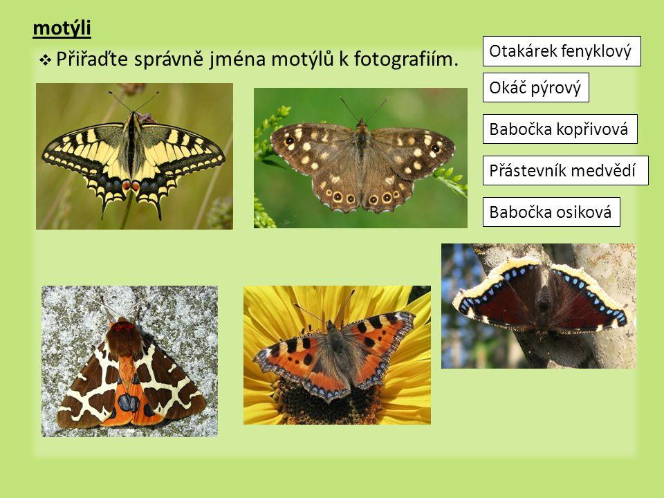 motýli Otakárek fenyklový Okáč pýrový Babočka kopřivová