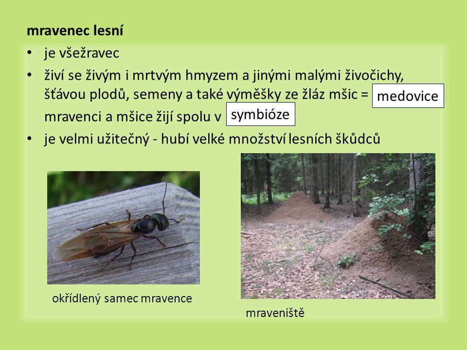 mravenci a mšice žijí spolu v