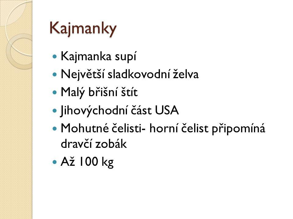 Kajmanky Kajmanka supí Největší sladkovodní želva Malý břišní štít