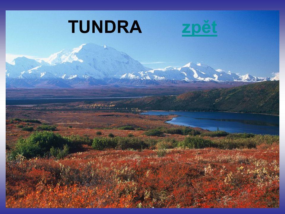 TUNDRA zpět