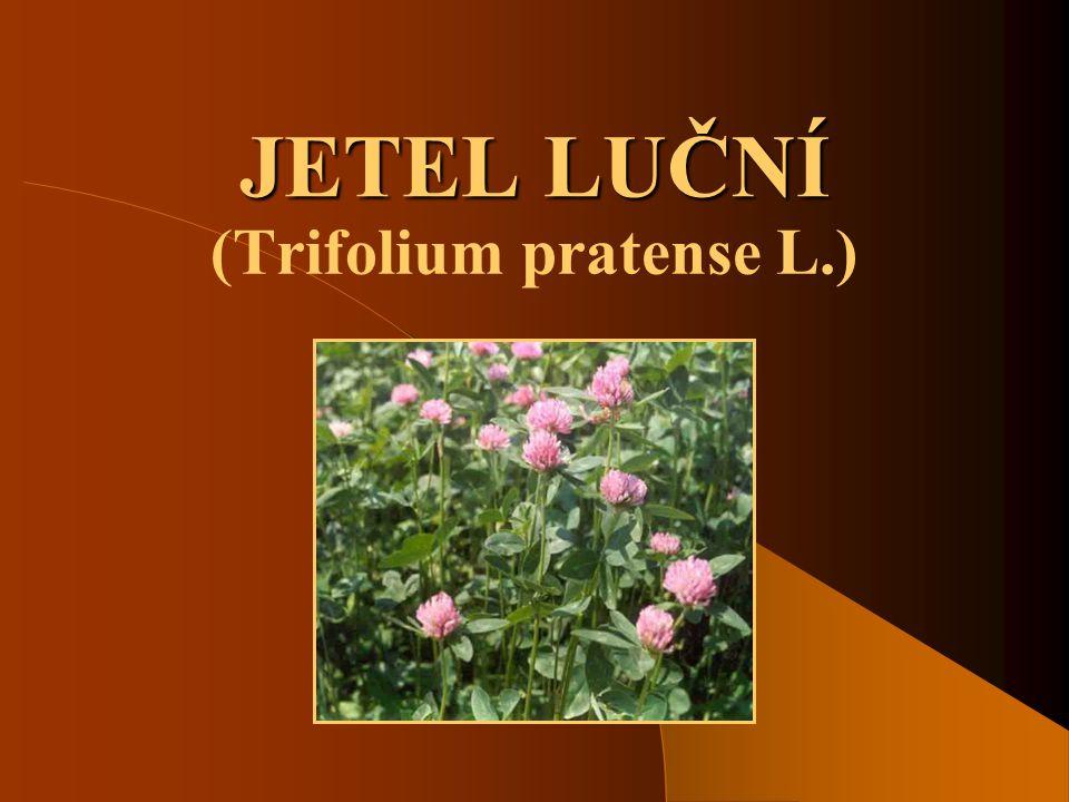 (Trifolium pratense L.)