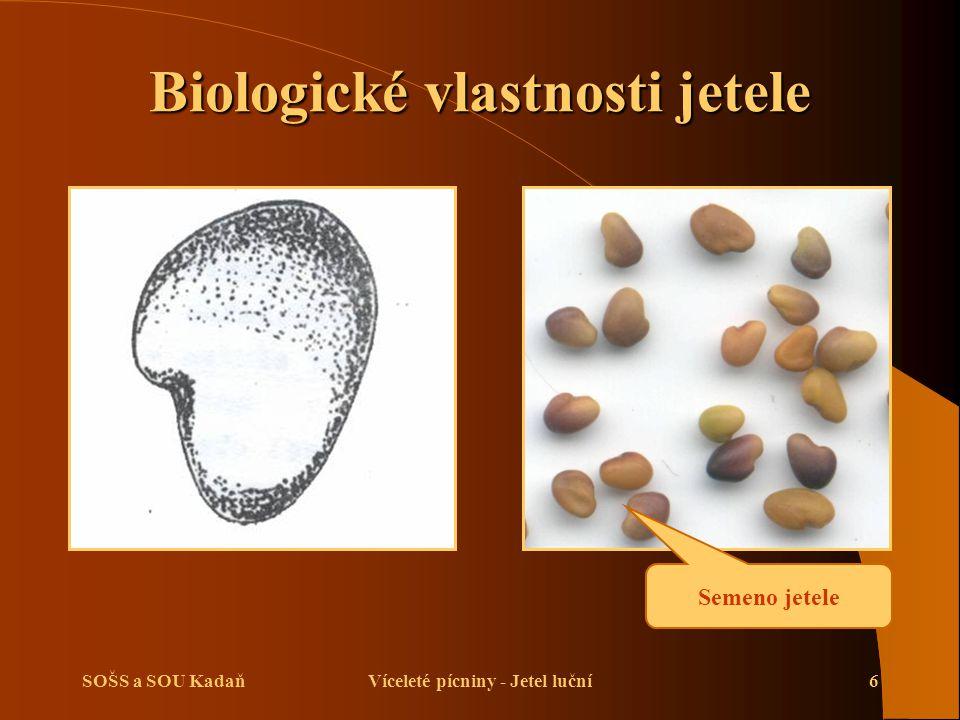 Biologické vlastnosti jetele Víceleté pícniny - Jetel luční