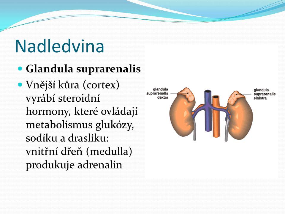 Nadledvina Glandula suprarenalis