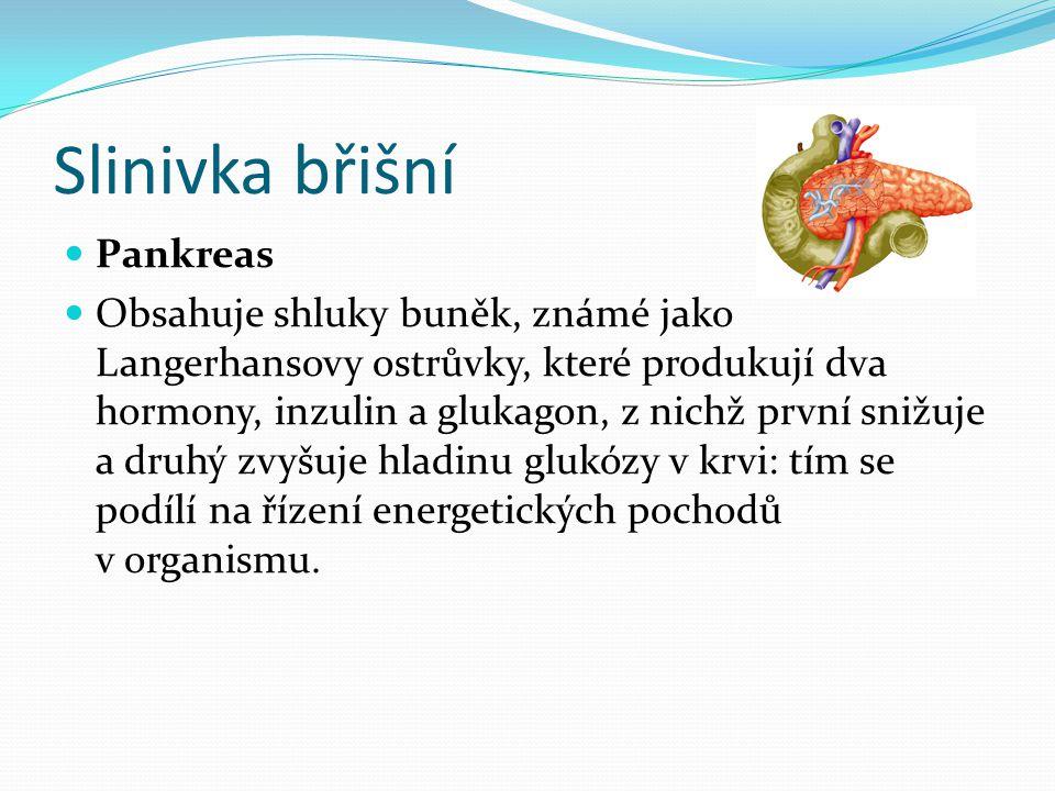 Slinivka břišní Pankreas