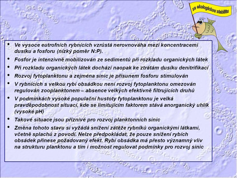 Ve vysoce eutrofních rybnících vzrůstá nerovnováha mezi koncentracemi dusíku a fosforu (nízký poměr N:P).