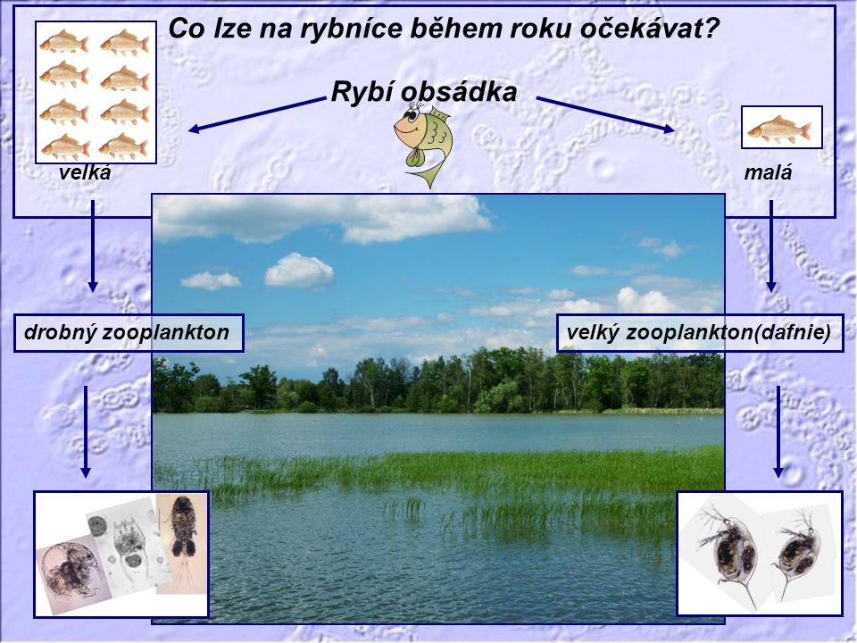 Co lze na rybníce během roku očekávat