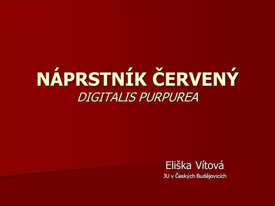NÁPRSTNÍK ČERVENÝ DIGITALIS PURPUREA