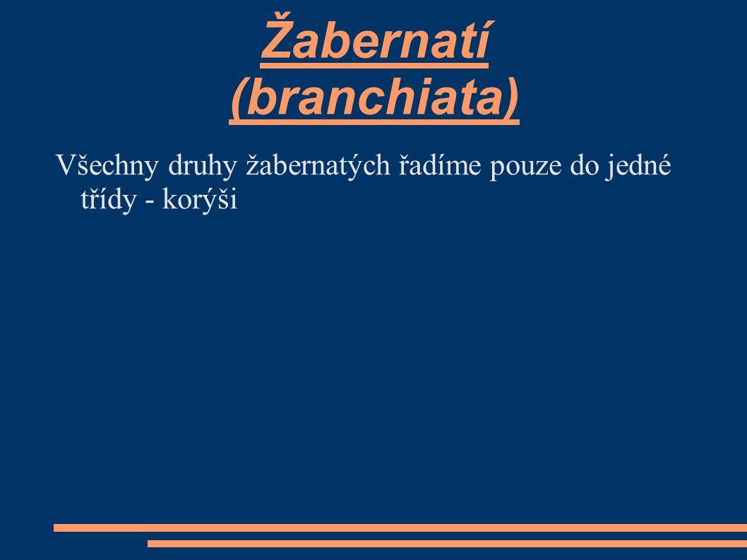 Žabernatí (branchiata)
