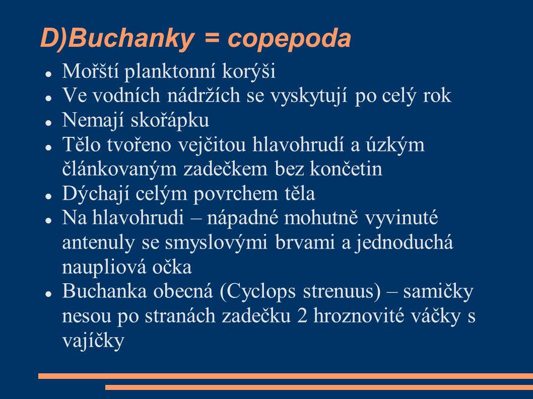 D)Buchanky = copepoda Mořští planktonní korýši