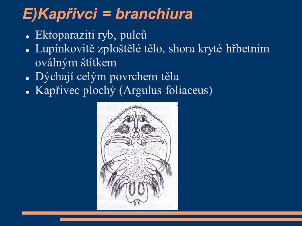 E)Kapřivci = branchiura