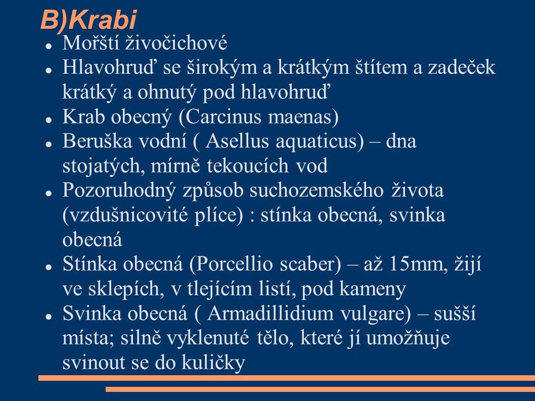 B)Krabi Mořští živočichové