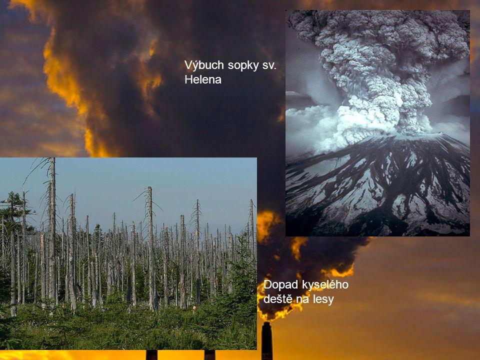Výbuch sopky sv. Helena Dopad kyselého deště na lesy