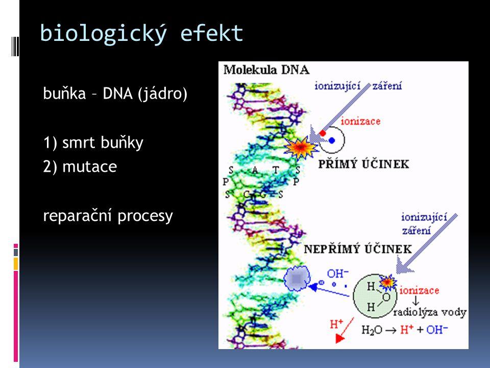 biologický efekt buňka – DNA (jádro) 1) smrt buňky 2) mutace