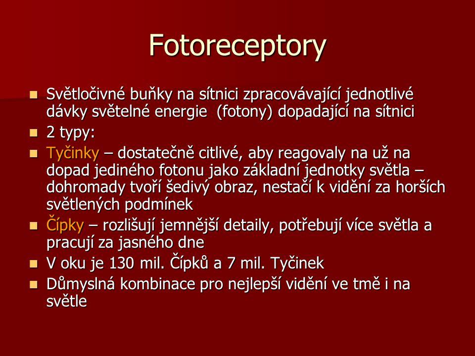Fotoreceptory Světločivné buňky na sítnici zpracovávající jednotlivé dávky světelné energie (fotony) dopadající na sítnici.