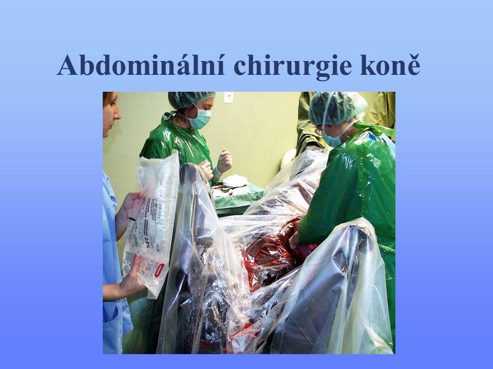 Abdominální chirurgie koně