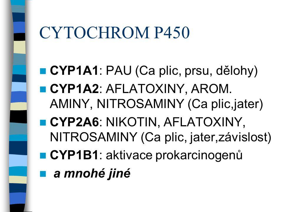 CYTOCHROM P450 CYP1A1: PAU (Ca plic, prsu, dělohy)