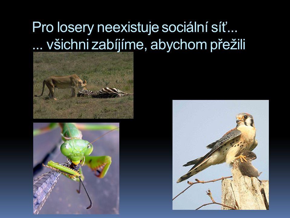 Pro losery neexistuje sociální síť... ... všichni zabíjíme, abychom přežili