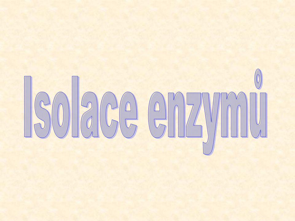 Isolace enzymů