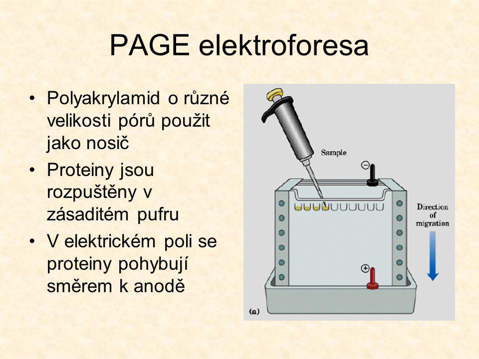 PAGE elektroforesa Polyakrylamid o různé velikosti pórů použit jako nosič. Proteiny jsou rozpuštěny v zásaditém pufru.