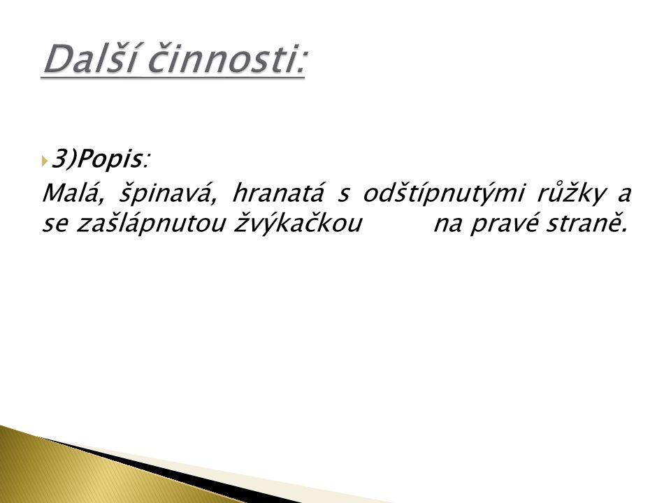 Další činnosti: 3)Popis:
