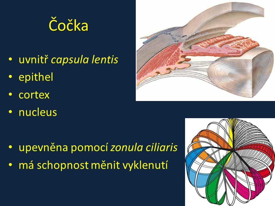 Čočka uvnitř capsula lentis epithel cortex nucleus