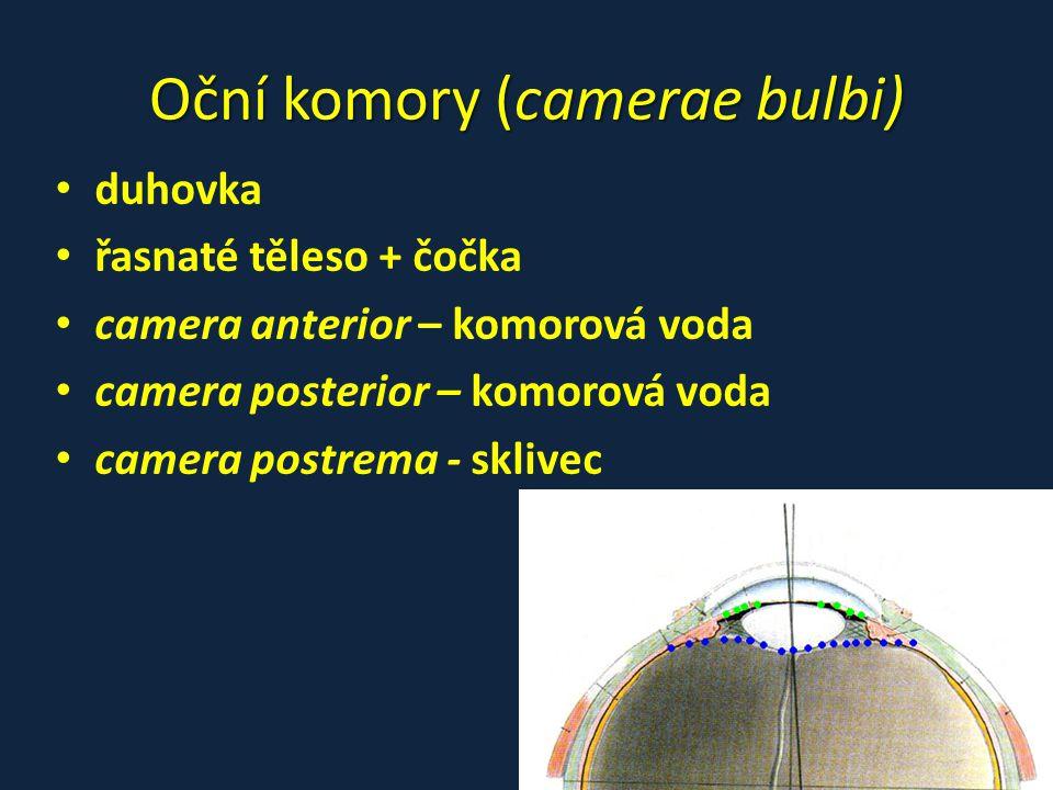 Oční komory (camerae bulbi)