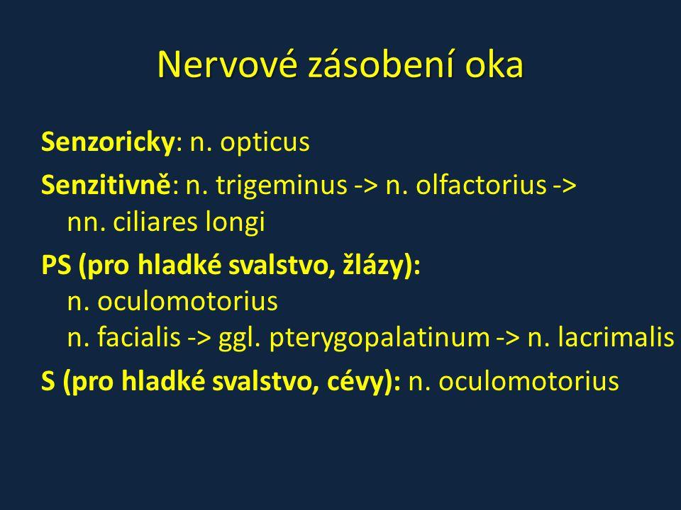 Nervové zásobení oka