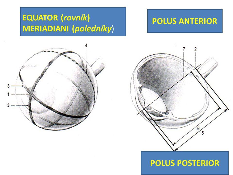 EQUATOR (rovník) MERIADIANI (poledníky)