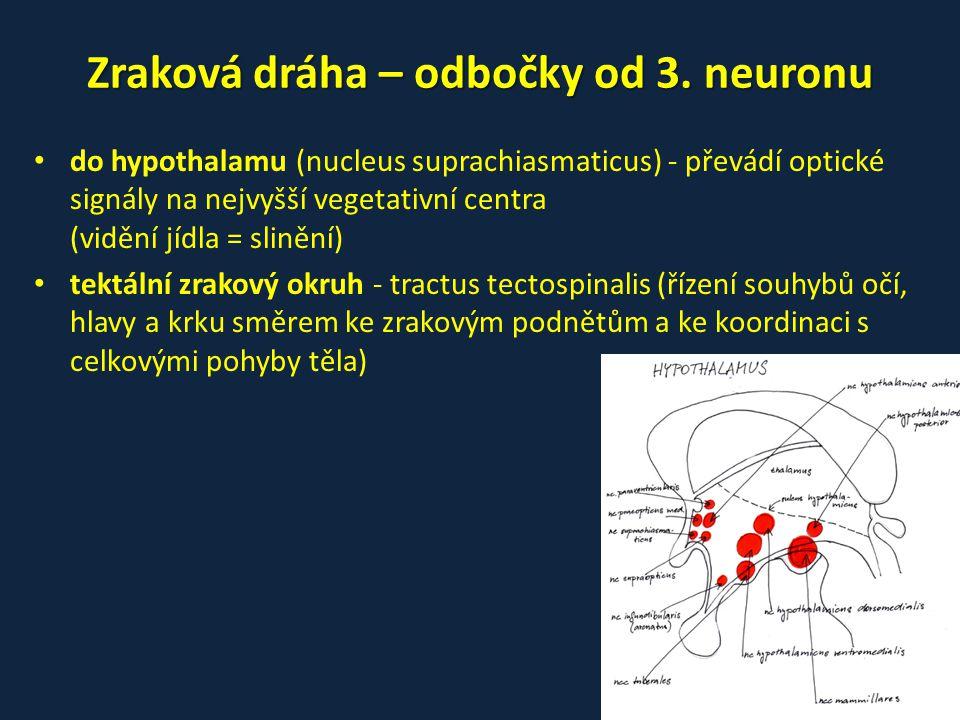 Zraková dráha – odbočky od 3. neuronu
