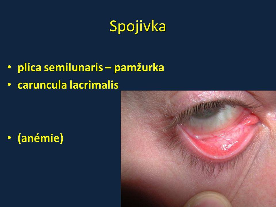 Spojivka plica semilunaris – pamžurka caruncula lacrimalis (anémie)