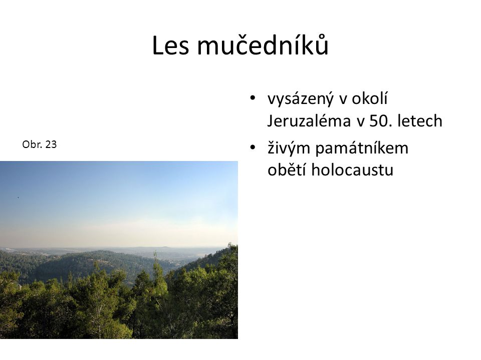 Les mučedníků vysázený v okolí Jeruzaléma v 50. letech