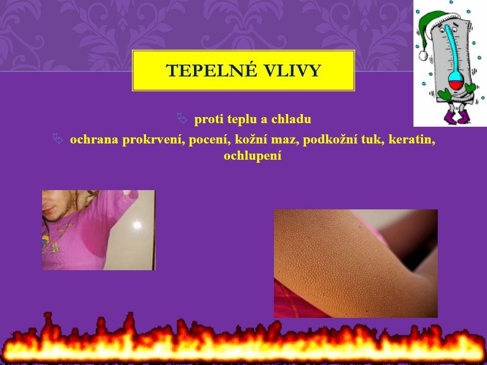 ochrana prokrvení, pocení, kožní maz, podkožní tuk, keratin, ochlupení