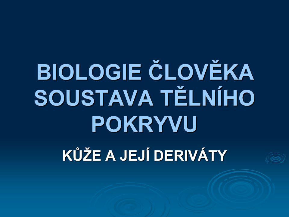 BIOLOGIE ČLOVĚKA SOUSTAVA TĚLNÍHO POKRYVU
