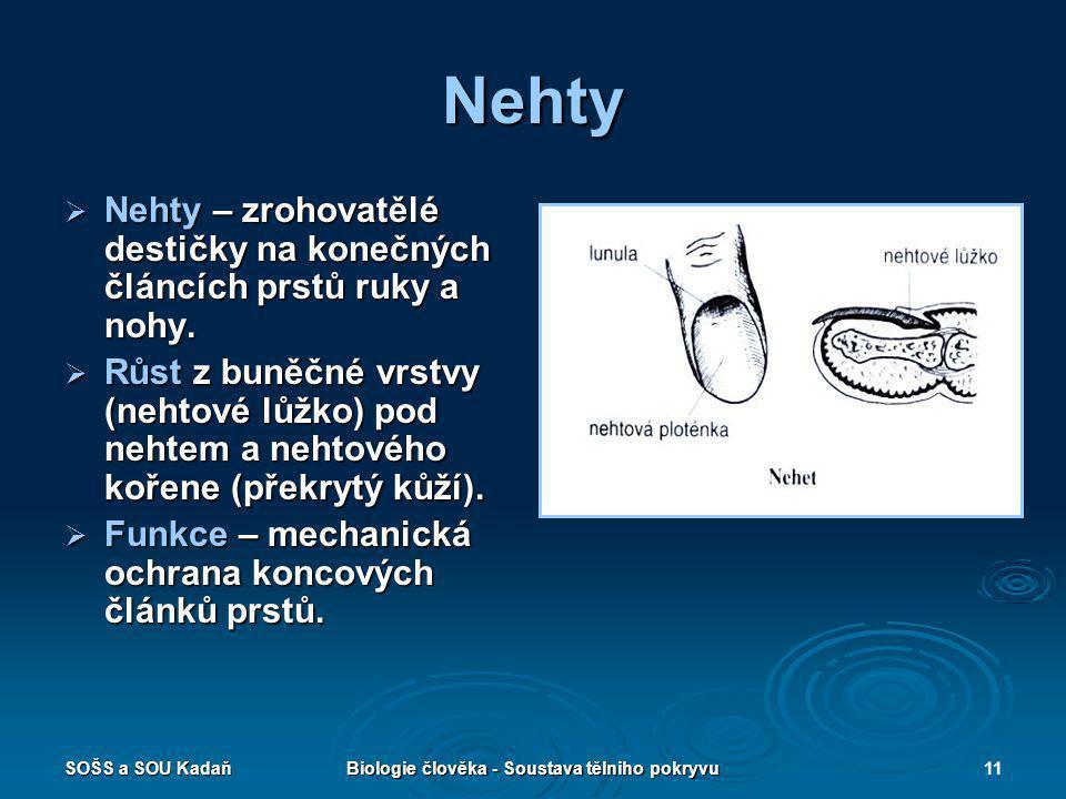 Biologie člověka - Soustava tělniho pokryvu