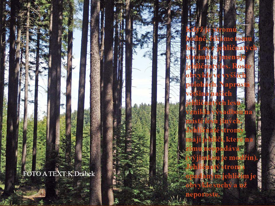 Když je stromů hodně, říkáme tomu les