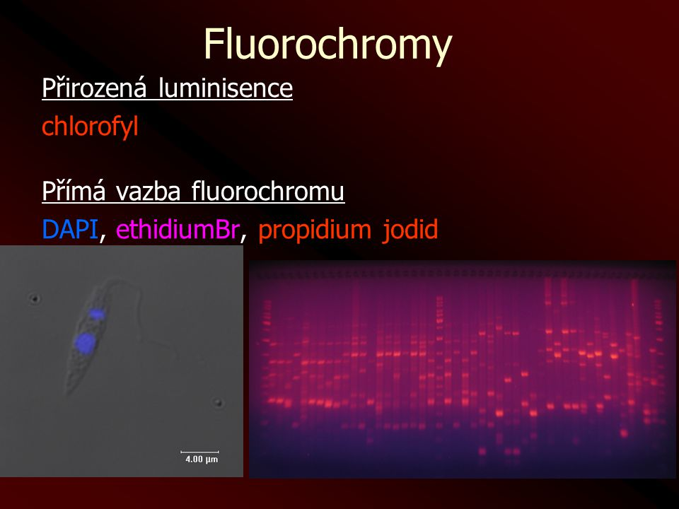 Fluorochromy Přirozená luminisence chlorofyl Přímá vazba fluorochromu