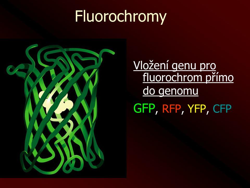 Fluorochromy GFP, RFP, YFP, CFP