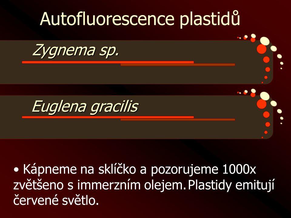 Autofluorescence plastidů