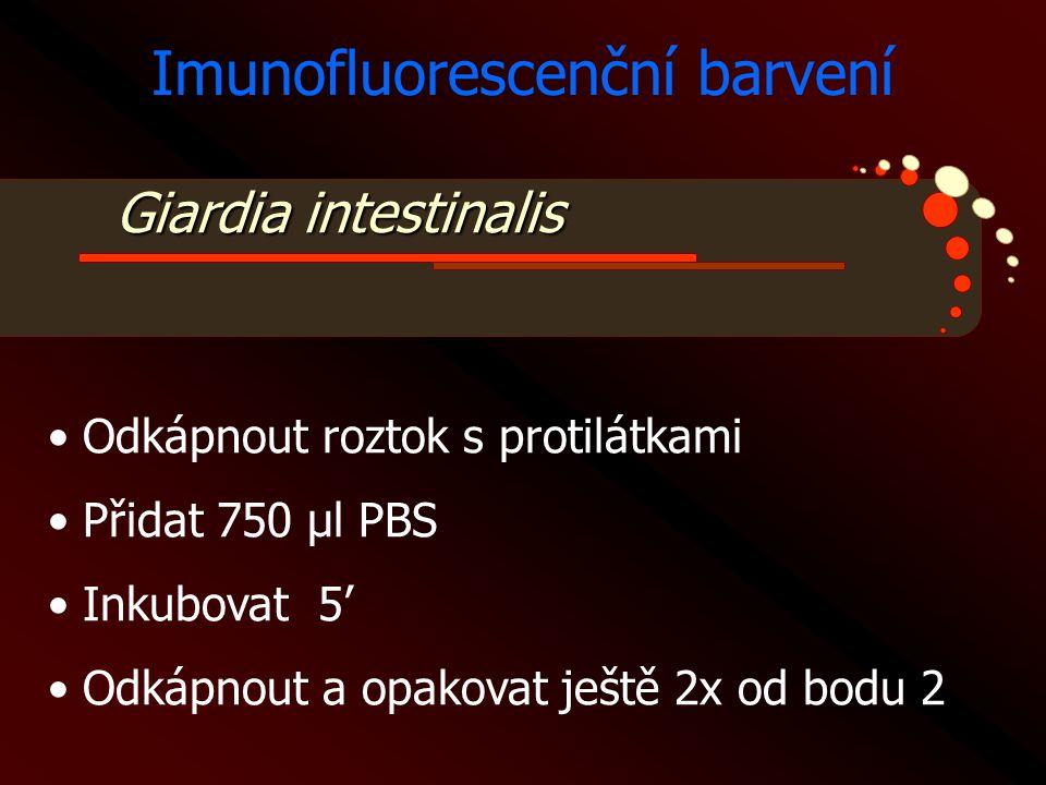 Imunofluorescenční barvení
