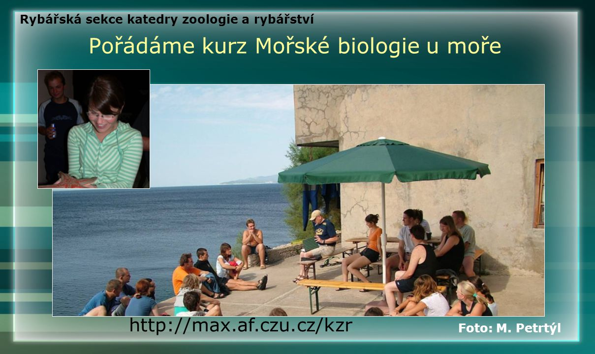 Pořádáme kurz Mořské biologie u moře