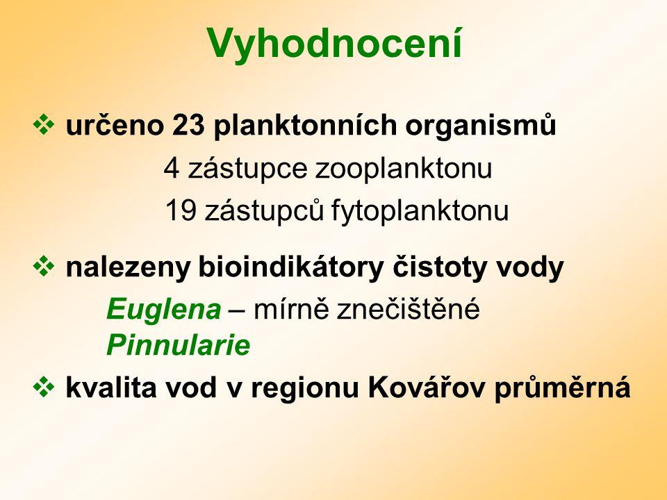 Vyhodnocení určeno 23 planktonních organismů 4 zástupce zooplanktonu